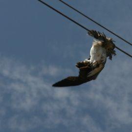 Suicide Seagull