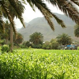 farm_at_the_mouth_of_the_agaete_valley