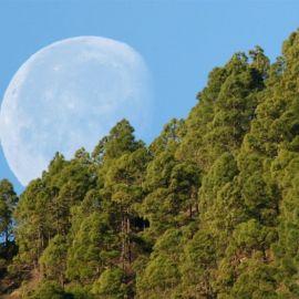 moon_setting_behind_tamadaba