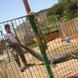 cocodrilo_park-102