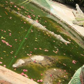 Cocodrilo Park