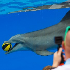 Dolphin show at Palmitos Park_2