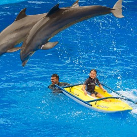Dolphin show at Palmitos Park_4
