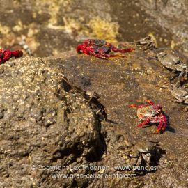 crabs-006