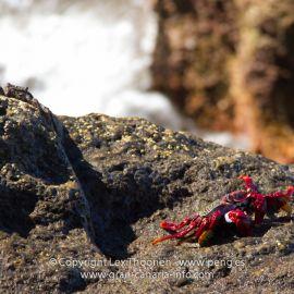 crabs-008