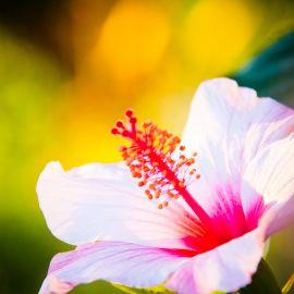 Flowers-010