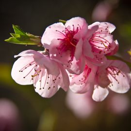 Flowers-011