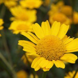flowers-012
