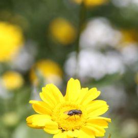 flowers-013