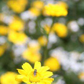 flowers-014