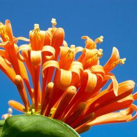 flowers-016