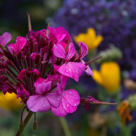 Flowers-032