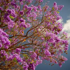 Flowers-034