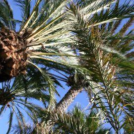 palms-001