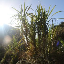 plants-001