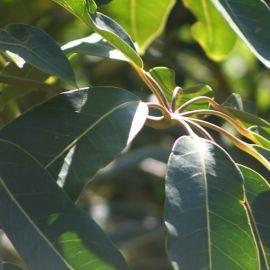 plants-021