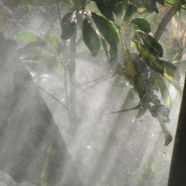 plants-022