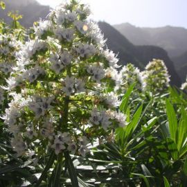 plants-025