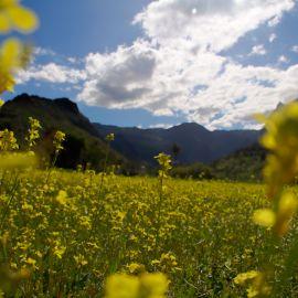 weed_field_flowers-001