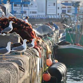 morning-in-puerto-de-las-nieves-011