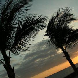 meloneras_palms-001
