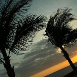 meloneras_palms-010