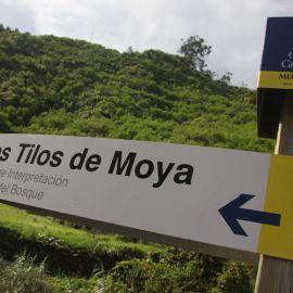 moya-026