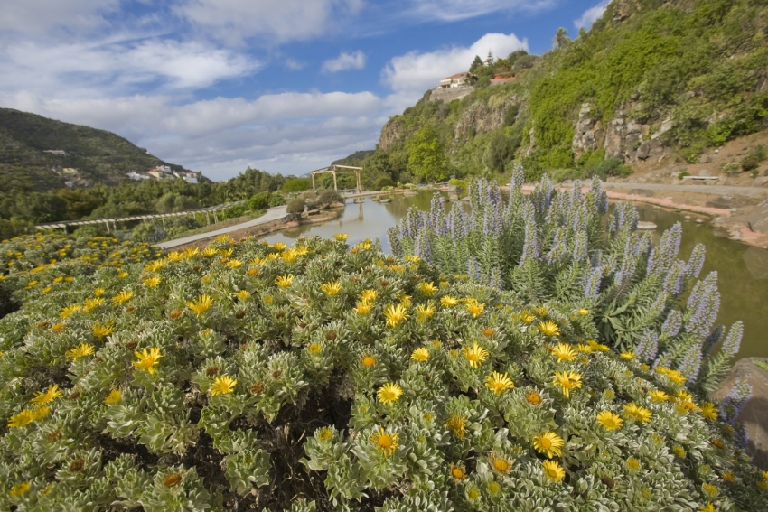 The beautiful Jardín Canaria in Gran Canaria