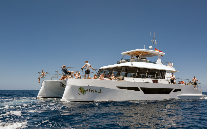 Cruise Gran Canaria's Beautiful Coast On The Superb Afrikat Catamaran