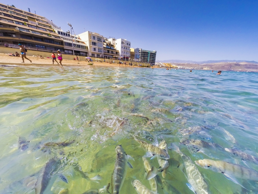 Friendly fish at Las Canteras beach