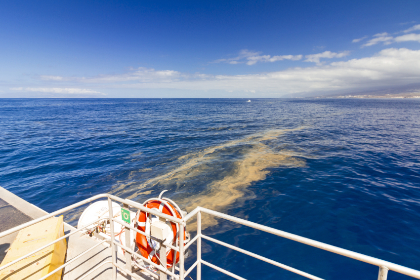 Sea sawdust bloom on the surface of the ocean close to the Canary Islands