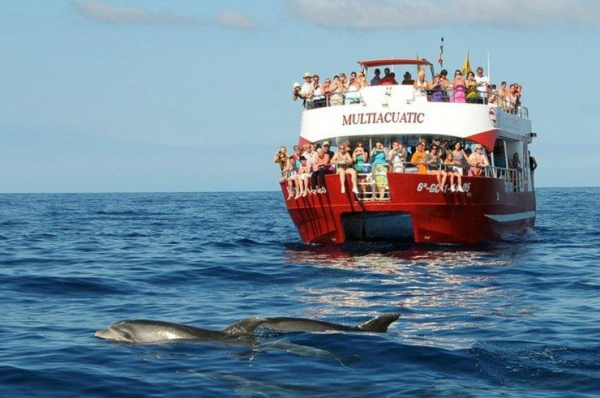 The Multiaquatic dolphoin watching trip in south Gran Canaria has a 98% success rate.