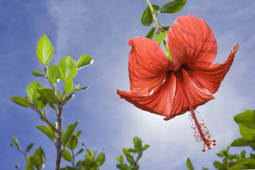 Most of the world's most beautiful tropical flowers grow in Gran Canaria's gardens