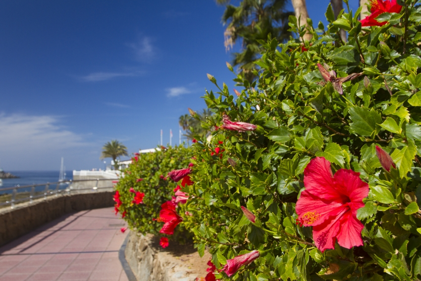 Sunny with mild temperatures this week in Gran Canaria